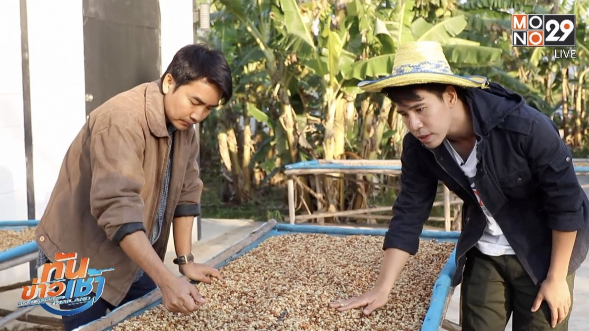 เจษฎาพาลุย : บุกโรงคั่ว ชมกาแฟเลือดอีสานของดีวังน้ำเขียว