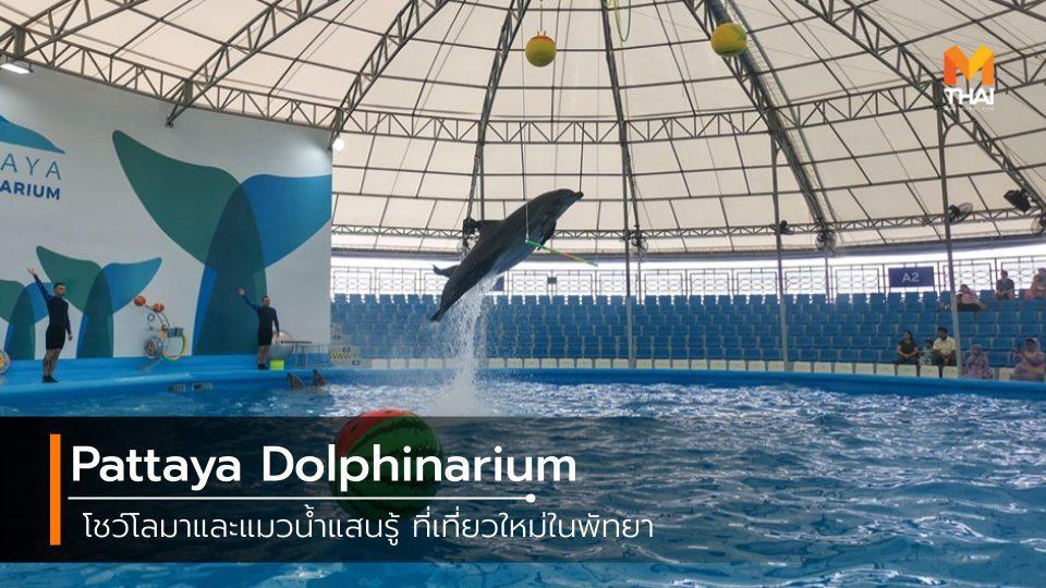Pattaya Dolphinarium โชว์โลมาและแมวน้ำแสนรู้ ที่เที่ยวใหม่ในพัทยา