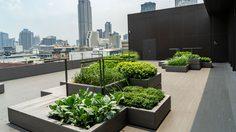 5 ไอเดียสวนลอยฟ้า แต่งสวนขนาดเล็ก จัดให้แจ่มๆ สำหรับบ้านตึกแถว