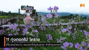 11 ทุ่งดอกไม้แสนสวย โคราช ปักหมุดไว้ หนาวนี้ไปเที่ยวกัน