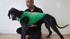 เปิดชื่อพระราชทาน สุนัขพันธ์เกรทเดน 13 ชีวิต