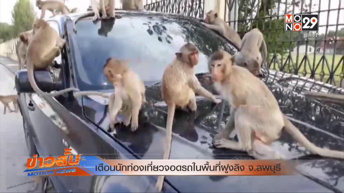 เตือนนักท่องเที่ยวจอดรถในพื้นที่ฝูงลิง จ.ลพบุรี