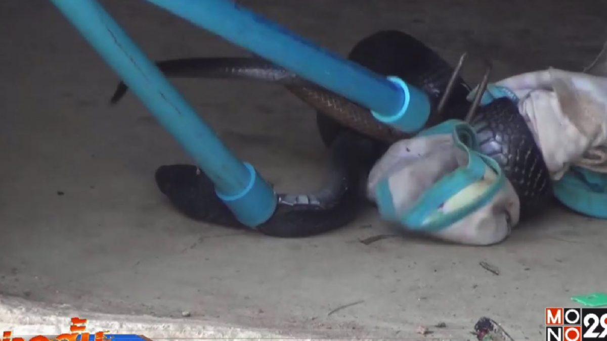 กู้ภัยปราณบุรีจับงูเห่าหม้อขดตัวอยู่ในบ้าน ปชช.
