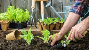 สดชื่น สบายตา แถมยังมีผักสดๆ ไว้กิน กับ ไอเดียทำ สวนผักขนาดเล็ก ปลูกไว้ที่บ้าน