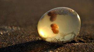 แตกตื่น ! ชาวบ้านพบวัตถุปริศนา มโนเป็นไข่เอเลี่ยน