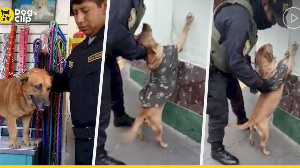 น้องหมาจรจัดที่ถูกรับเลี้ยงโดยเจ้าหน้าที่ตำรวจ รักที่จะช่วยคุณตำรวจซ้อมตรวจอาวุธ