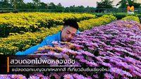 """""""สวนดอกไม้พ่อหลวงชัชร์"""" แปลงดอกเบญจมาศหลากสี ที่เที่ยวอันซีนเชียงใหม่"""