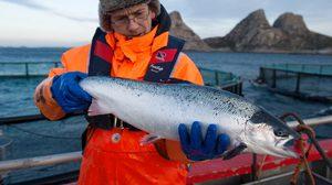 จริงหรือหลอก! 8 เรื่องผิดๆ ที่คุณอาจได้ยินเกี่ยวกับปลาแซลมอน