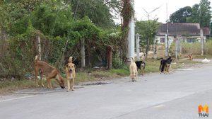 ตะลึง!! ฝูงสุนัขจรจัดกว่า 200 ตัว ยึดพื้นที่หลังโรงพยาบาล
