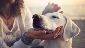 กฏ 5 ข้อควรคำนึง ในการรับ ลูกสุนัข เข้ามาเป็น สมาชิกใหม่ ในบ้าน
