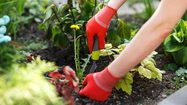 กำจัด วัชพืช ด้วยวิธีแบบธรรมชาติ ปลอดภัยต่อคนและสิ่งแวดล้อม