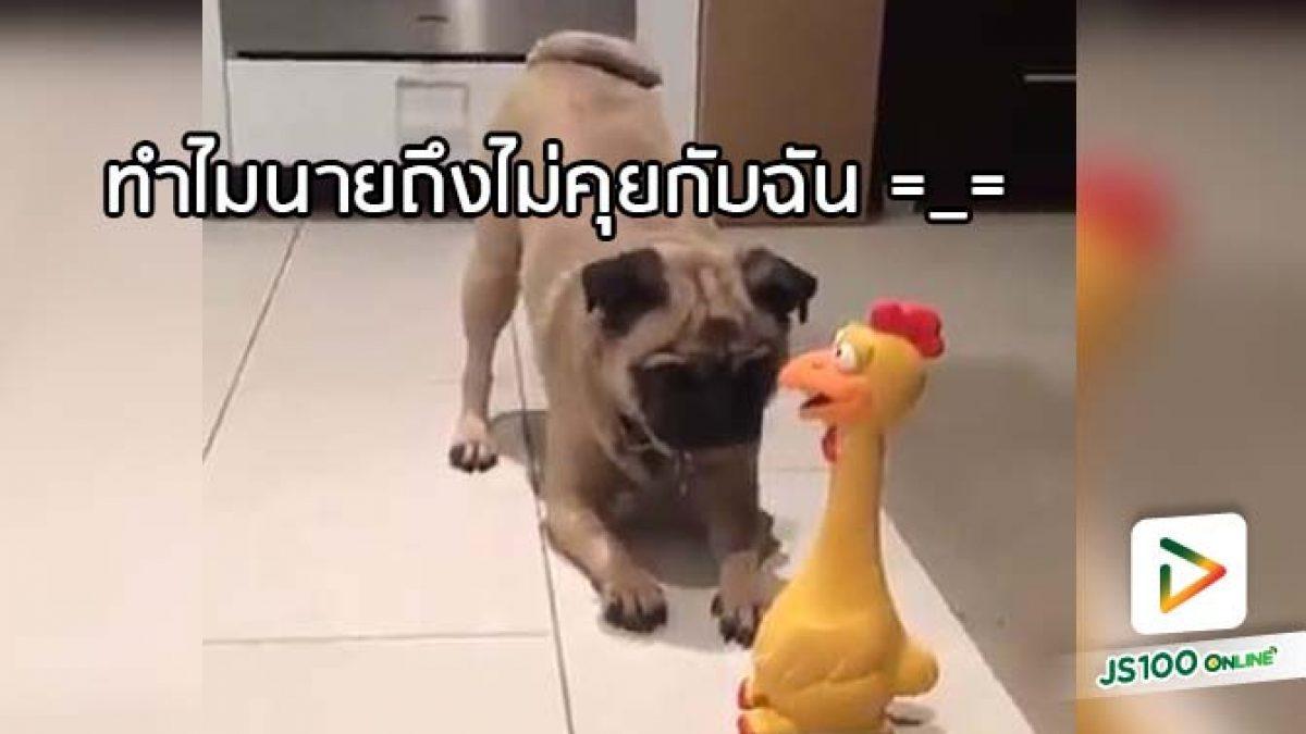 คลิปสุนัขตัวแสบ พยายามสื่อสารกับเจ้ากุ๊กไก่ แต่ไม่เป็นผล.. (26-04-61)