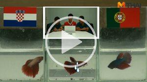 ซี้ซั้วฟันธง! ปลากัดทายผล ยูโร 2016 โครเอเชีย ปะทะ โปรตุเกส (25 มิ.ย.)