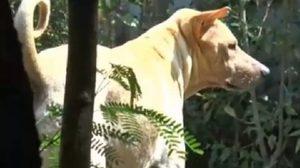 เผยโฉมสุนัขฮีโร่ 'เจ้าโจ้' รุดช่วยชีวิต 'น้องดีเจ' เด็กหายในภูเก็ต