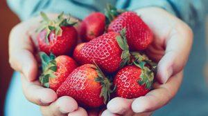 10 อันดับ ผลไม้ที่มีวิตามินซีสูงที่สุด ช่วยต้านหวัด เพิ่มภูมิคุ้มกันให้ร่างกาย