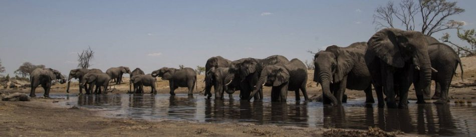 Elephant: King Of the Kalahari สารคดี ราชาแห่งคาลาฮารี