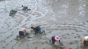 งานเปิดโลกทะเลโคลน จ.เพชรบุรี