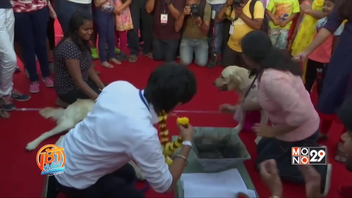 พิธีแต่งงานสุนัขในอินเดีย
