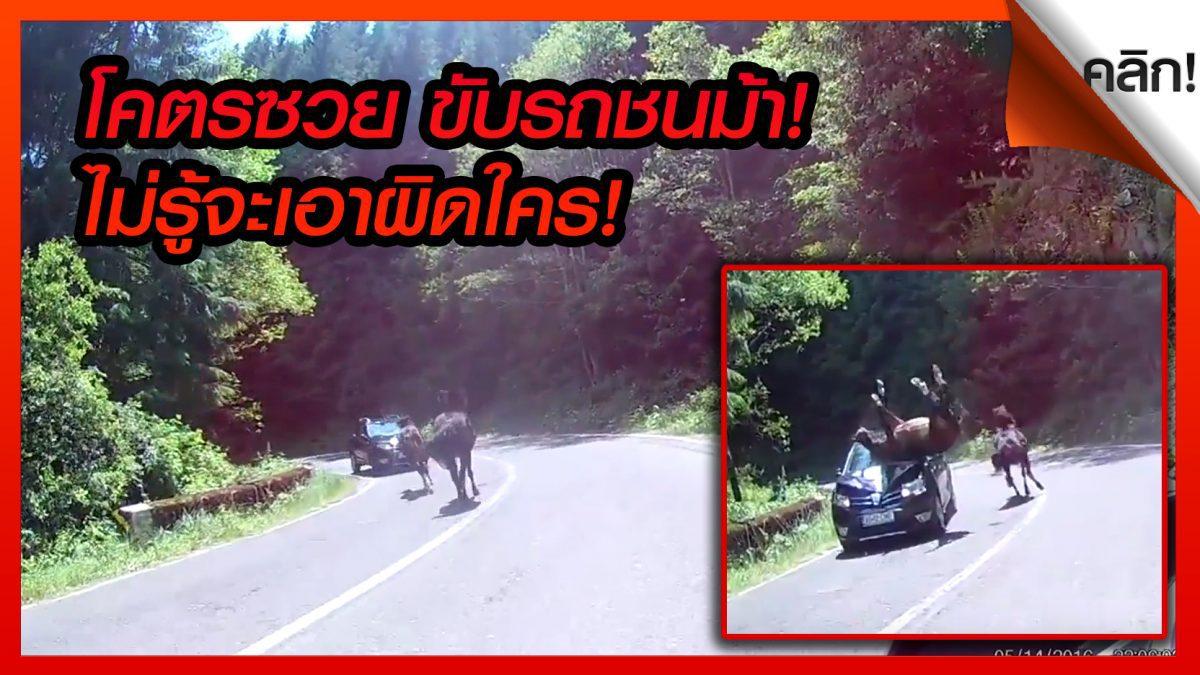(คลิปเด็ดต่างประเทศ) รถยนต์ชนม้าบนถนนในโรมาเนีย ม้าเจ็บช้ำเเล้ววิ่งต่อ ส่วนรถยังงงไม่รู้เอาผิดใคร