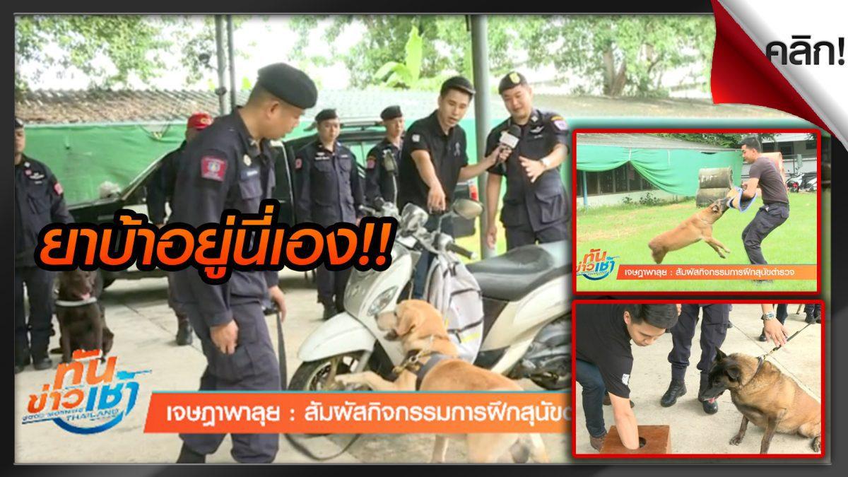 (คลิปเด็ดทั่วไทย) เจษฎาพาลุย : สัมผัสกิจกรรมการฝึกสุนัขตำรวจ โหด มันส์ ฮา!