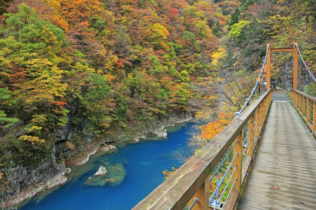 หุบเขาดาคิกะเอริ (Dakigaeri) สถานที่ ชมใบไม้เปลี่ยนสีที่ญี่ปุ่น