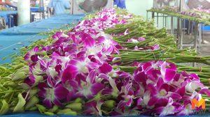 กระทรวงพาณิชย์ดัน 'กล้วยไม้ไทย' ขายผ่านอาลีบาบา