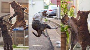แมวกังฟู โหดกว่านี้ไม่มีอีกแล้ว เจ้ามนุษย์โลกจงระวังตัวเอาไว้นะ