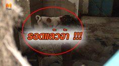 รอดแล้ว! สุนัขที่ถูกขังในบ้านย่านบางบัวทอง ด้านเจ้าของยันไม่ได้ทิ้ง
