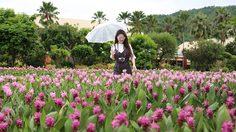 ชวนชมสวน ปทุมมา บานสะพรั่งที่ อุทยานหลวงราชพฤกษ์