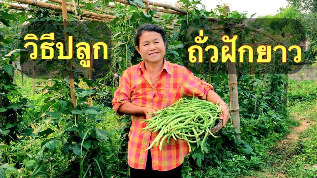 วิธีปลูกถั่วฝักยาว / How to grow long beans / 如何种植长豆