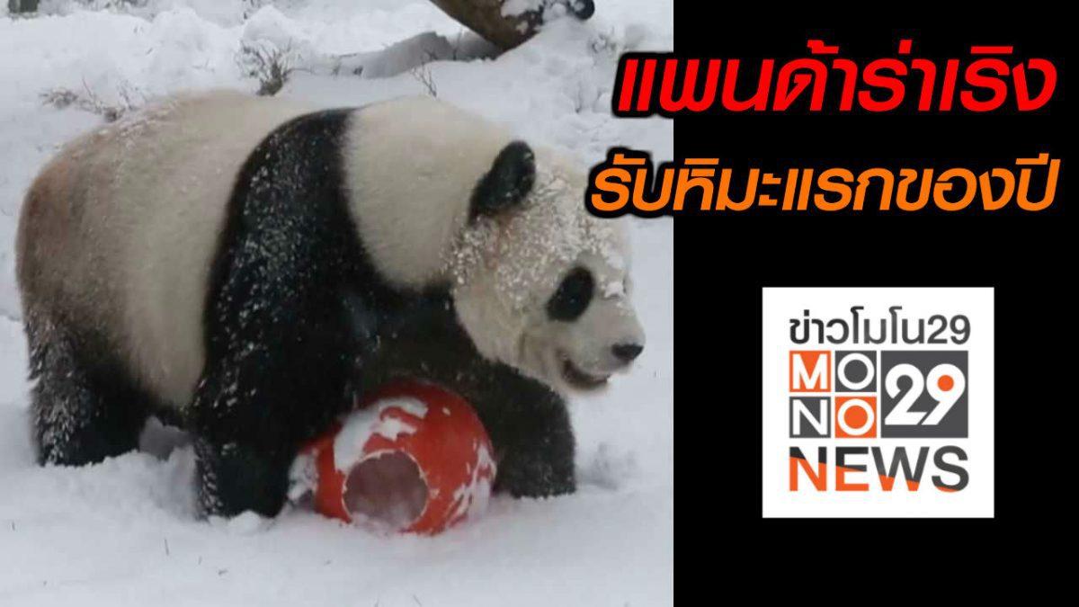 #เรื่องเล่ารอบโลก แพนด้าในสวนสัตว์จีนร่าเริงรับหิมะแรกของปี