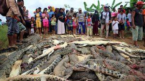 หนุ่มอินโดนิเซียถูก จระเข้ ทำร้ายจนเสียชีวิต ชาวบ้านเลยรวมตัวกันไปสังหารหมู่พวกมันถึงในฟาร์ม