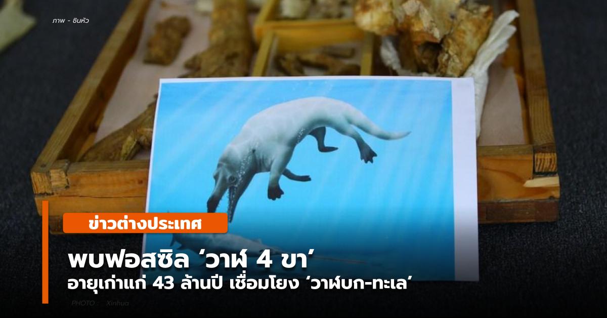 พบฟอสซิล 'วาฬ 4 ขา' อายุเก่าแก่ 43 ล้านปี เชื่อมโยง 'วาฬบก-ทะเล'