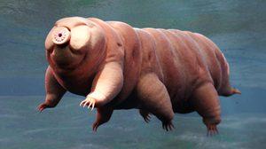 การค้นพบหมีน้ำสายพันธุ์ใหม่