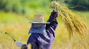 เงินเยียวเกษตรกร ยื่นอุทธรณ์วันนี้ 5 มิ.ย.63 วันสุดท้าย / อีกชุดยื่นได้ถึง 15 ส.ค.63