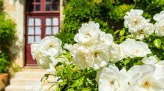 5 ดอกไม้ไทย ความหมายดีนำมาปลูกเพิ่มความสดชื่นให้กับบ้านกันเถอะ