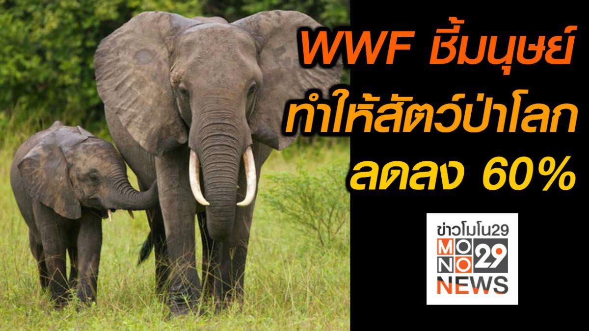 #เรื่องเล่ารอบโลก WWF ชี้มนุษย์ทำให้สัตว์ป่าโลกลดลง 60%