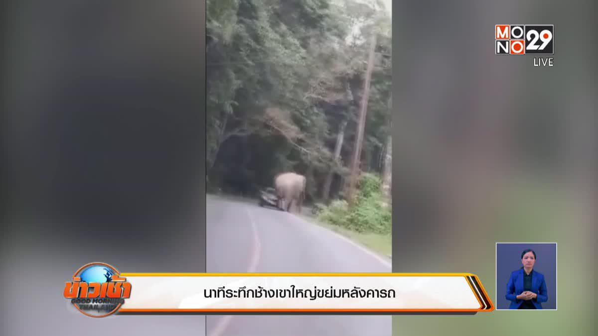 นาทีระทึกช้างเขาใหญ่ขย่มหลังคารถ