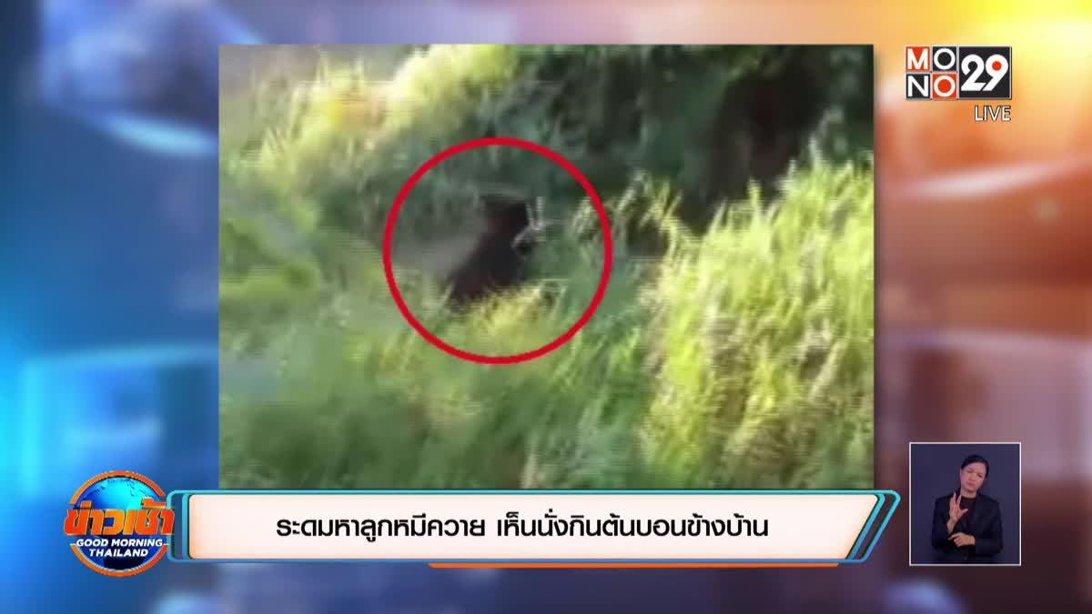 ระดมหาลูกหมีควาย เห็นนั่งกินต้นบอนข้างบ้าน