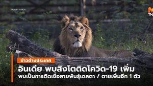 อินเดีย พบสิงโตหลายตัวติดโควิด-19 สายพันธุ์เดลตา / ตายเพิ่ม 1 ตัว