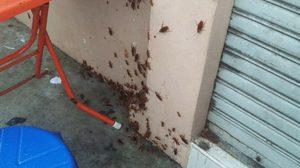 แชร์ว่อนภาพแมลงสาบไต่ยั้วะเยี้ยะ ในร้านก๋วยเตี๋ยว