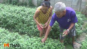 2 ตายาย ปลูกพืชสวนครัวพื้นบ้าน สร้างรายได้ถึงวันละ 1,000 บาท