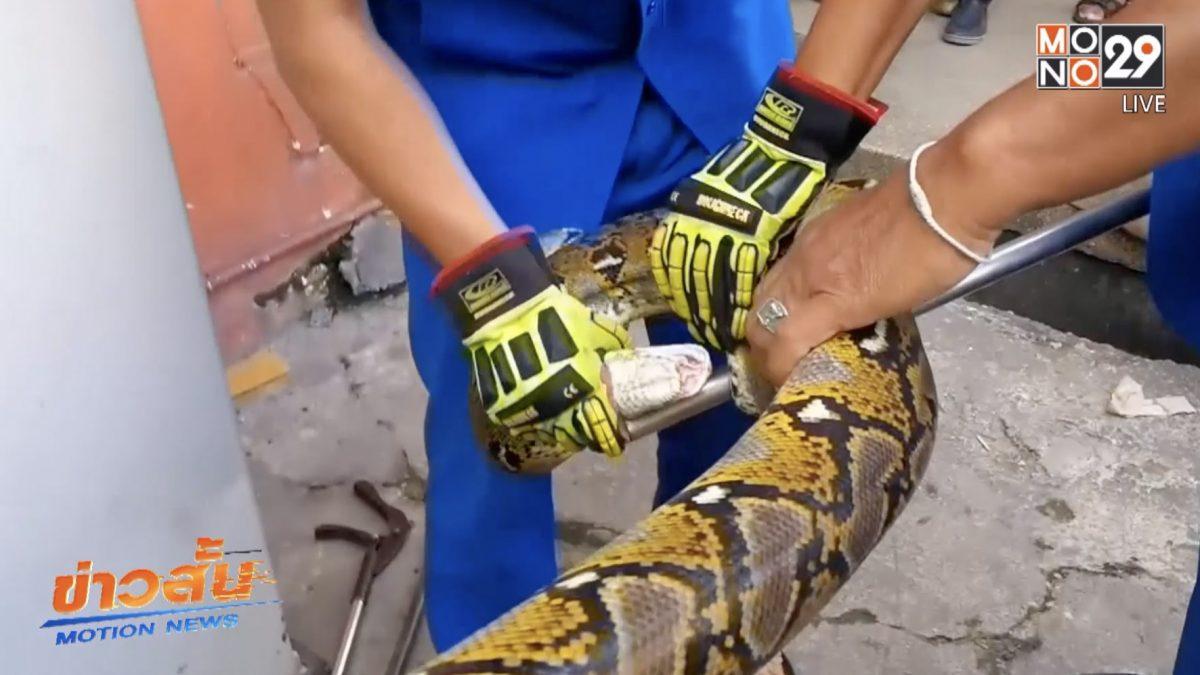 จับงูเหลือมในซูเปอร์มาร์เก็ตกลางเมืองหาดใหญ่