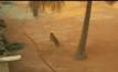 เสือดาววิ่งเข้ามาในโรงเรียนที่อินเดีย