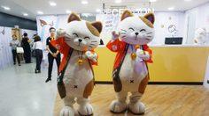 """""""มาเนกิเนโกะ"""" แฟมิลี่คาราโอเกะ สัญชาติญี่ปุ่น ปิดตี3! เริ่มต้นเพียง 160 บาท"""