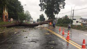 พายุโพดุล ทำน้ำท่วมถนนในยโสธร ต้นไม้ล้มขวางทางสัญจรลำบาก