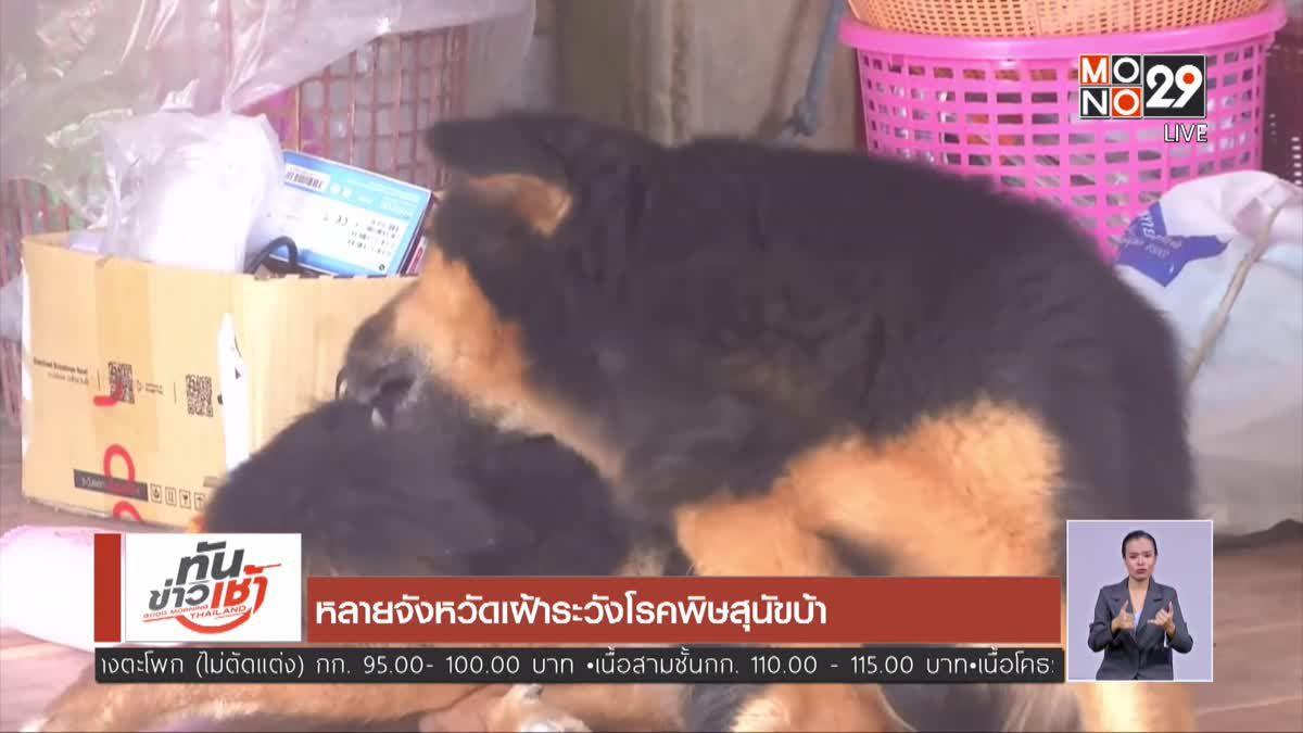 หลายจังหวัดเฝ้าระวังโรคพิษสุนัขบ้า