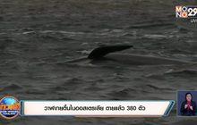 วาฬเกยตื้นในออสเตรเลีย ตายแล้ว 380 ตัว
