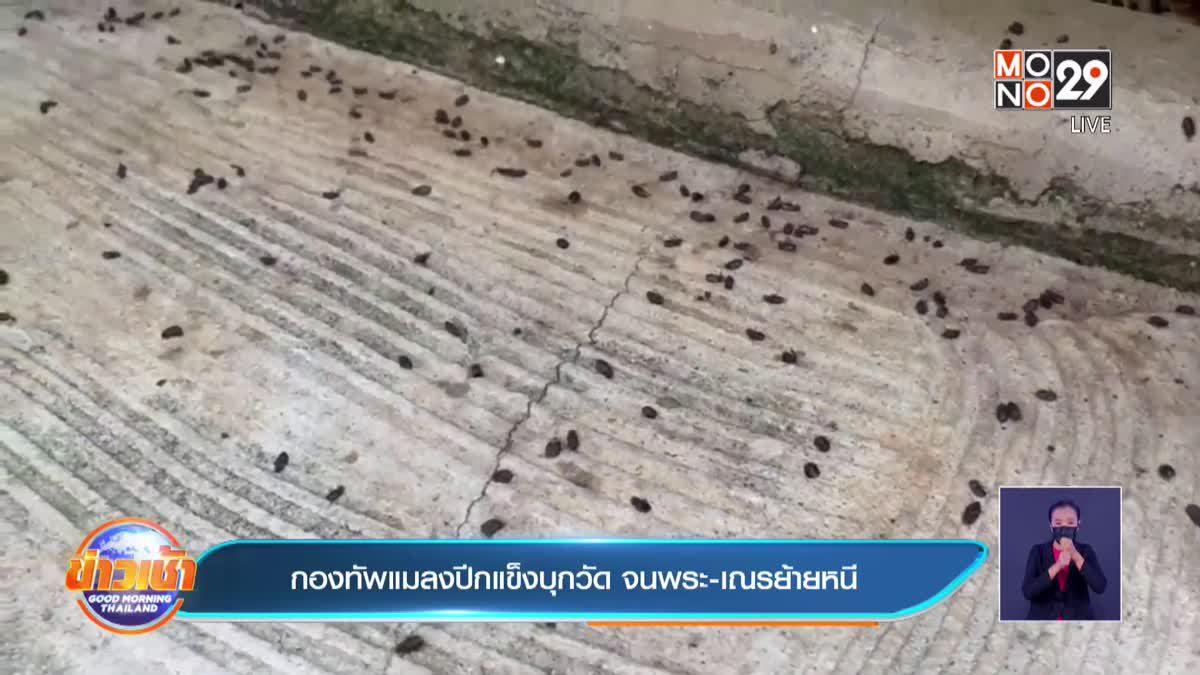 กองทัพแมลงปีกแข็งบุกวัด จนพระ-เณรย้ายหนี