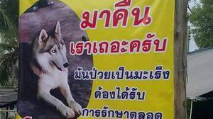 หมาป่วยมะเร็งหาย เจ้าของขึ้นป้าย วอนโปรดเอามาคืน!